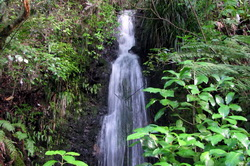 Kauri Grove Waterfall